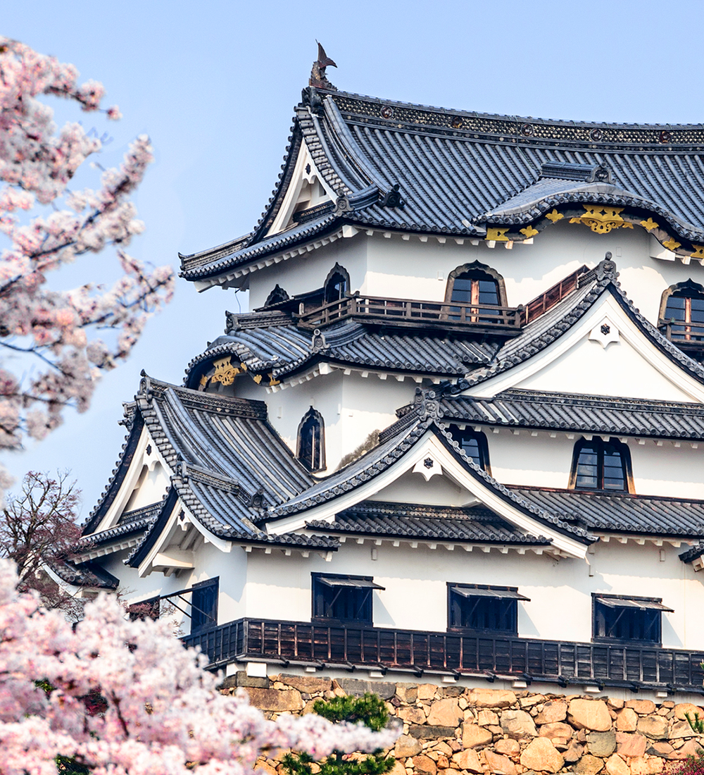 hikone castle surrounded by cherry blossom trees in the spring