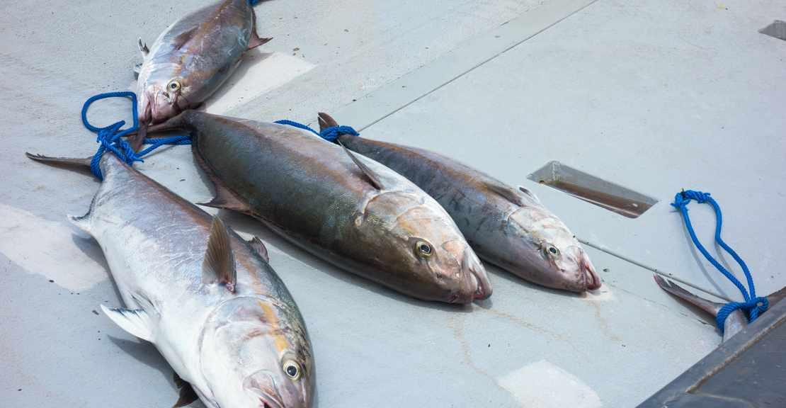 Lekker vis eten in Costa Calida