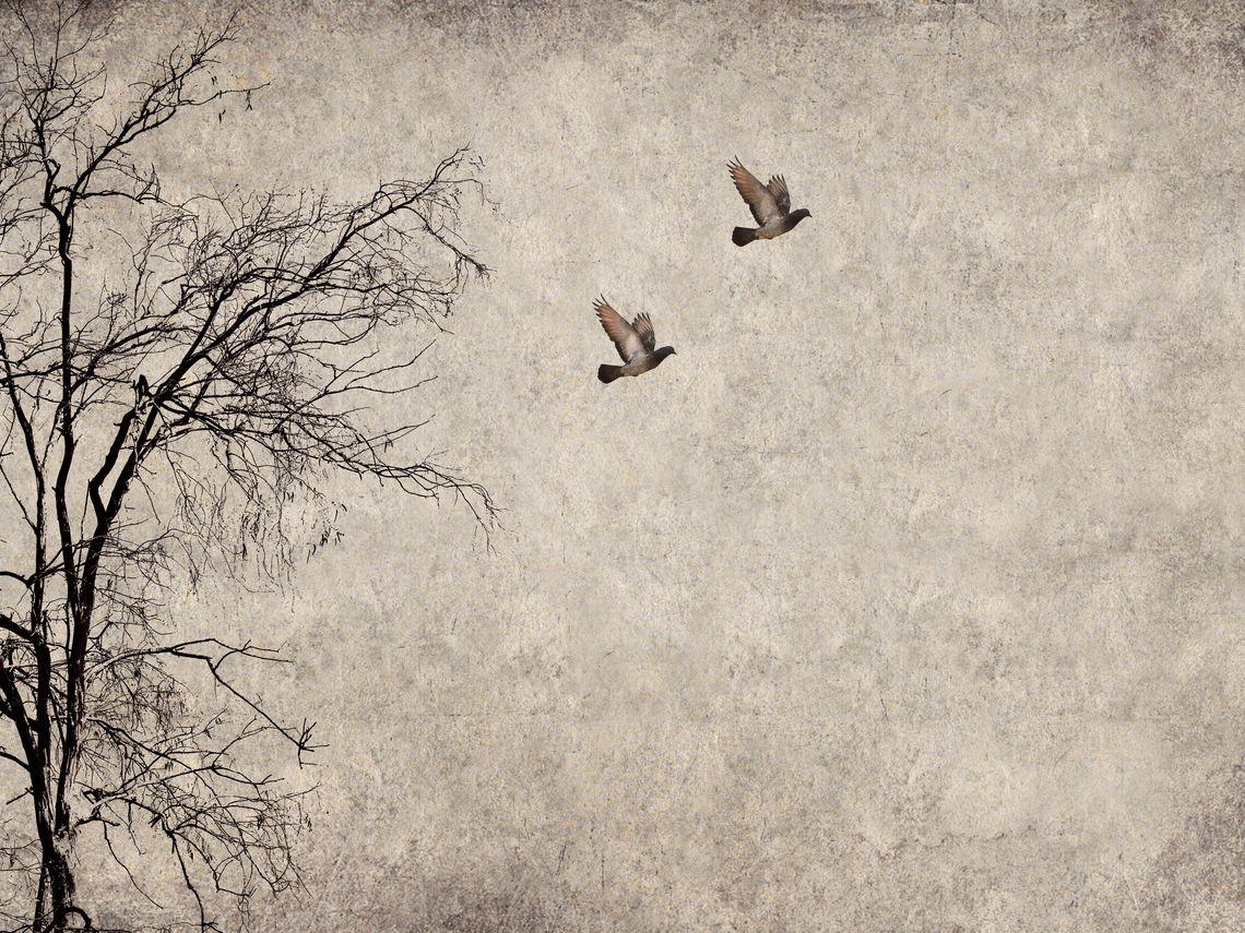 zwei Tauben, die von einem Baum wegfliegen