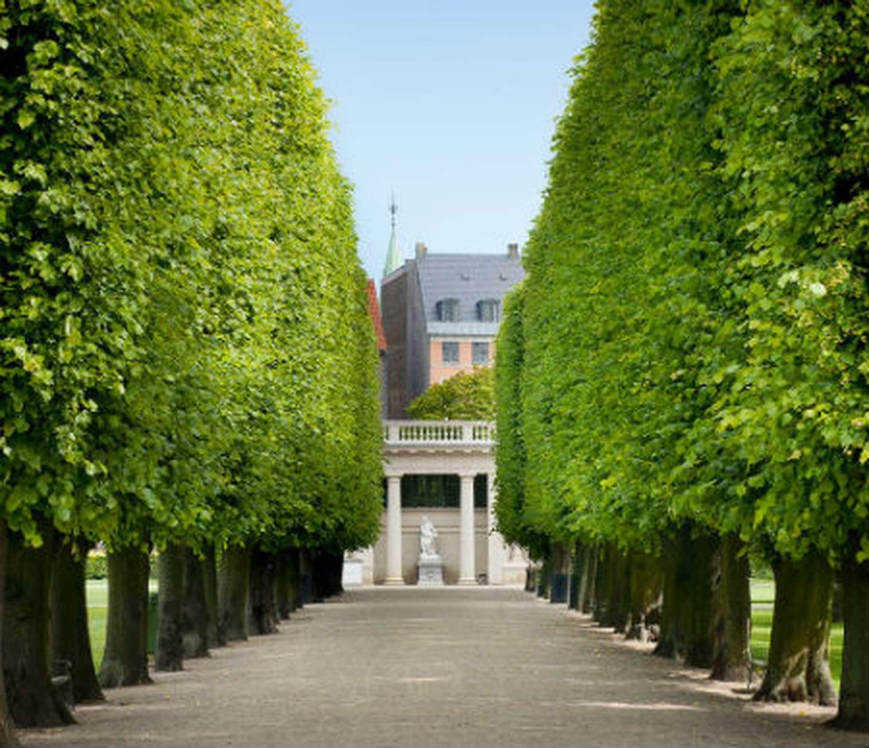 An avenue in the King's Garden
