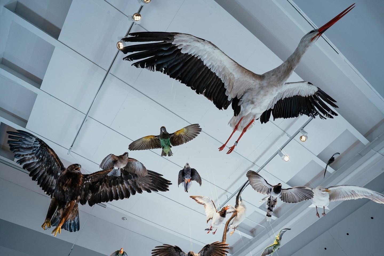 Et kig på fugle på Statens Naturhistoriske Museum