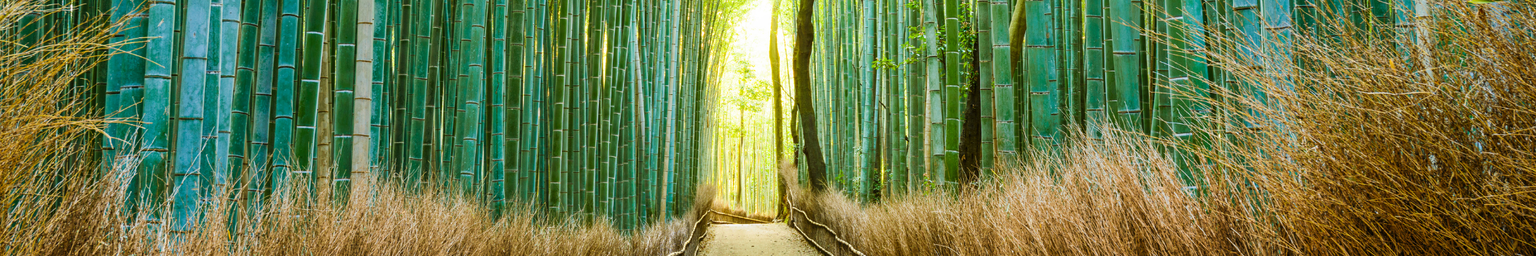 Bamboo Forest in Kyoto, Japan