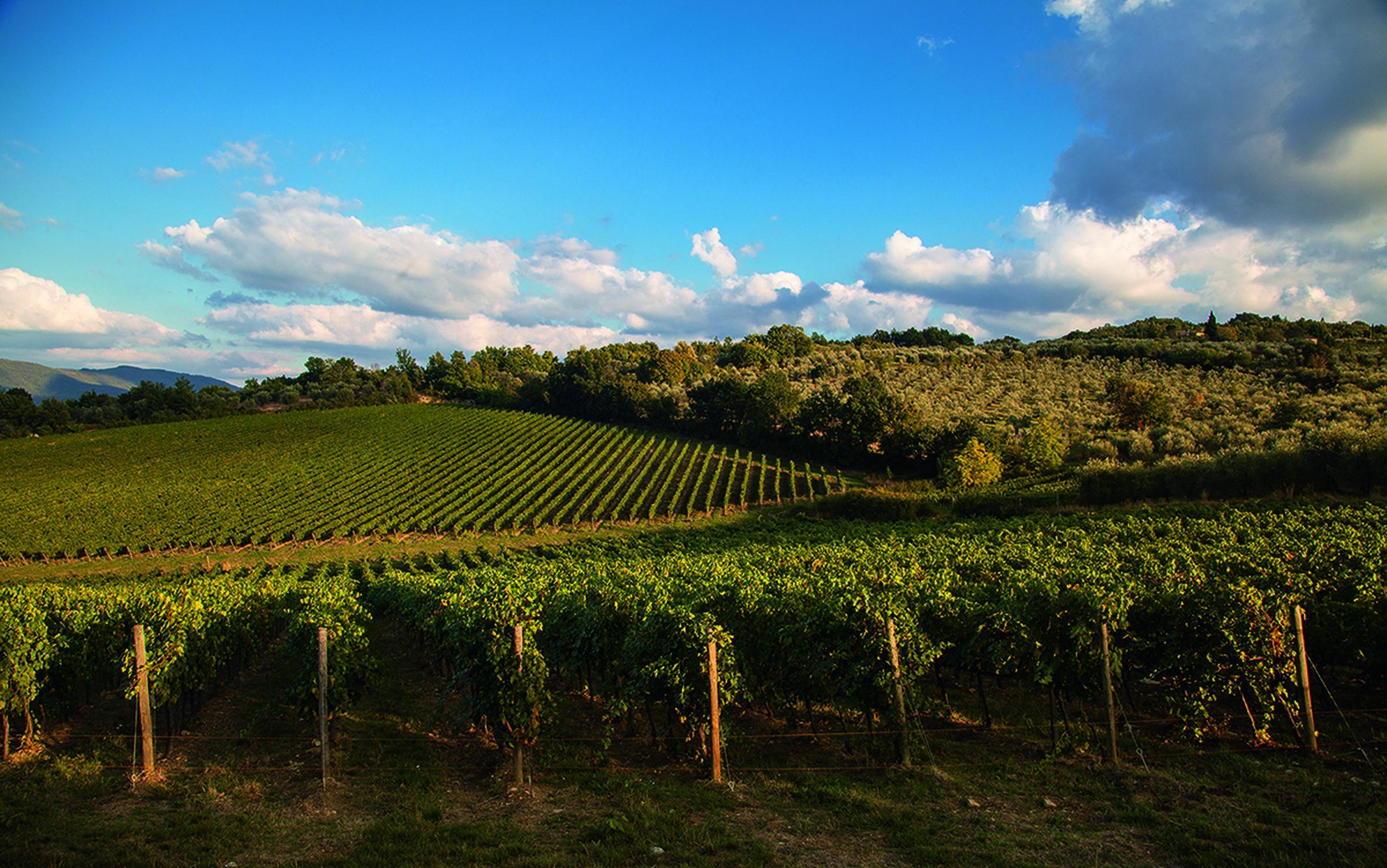 https://a.storyblok.com/f/105614/1200x751/5064e285c9/antinori-vineyards-3.jpg