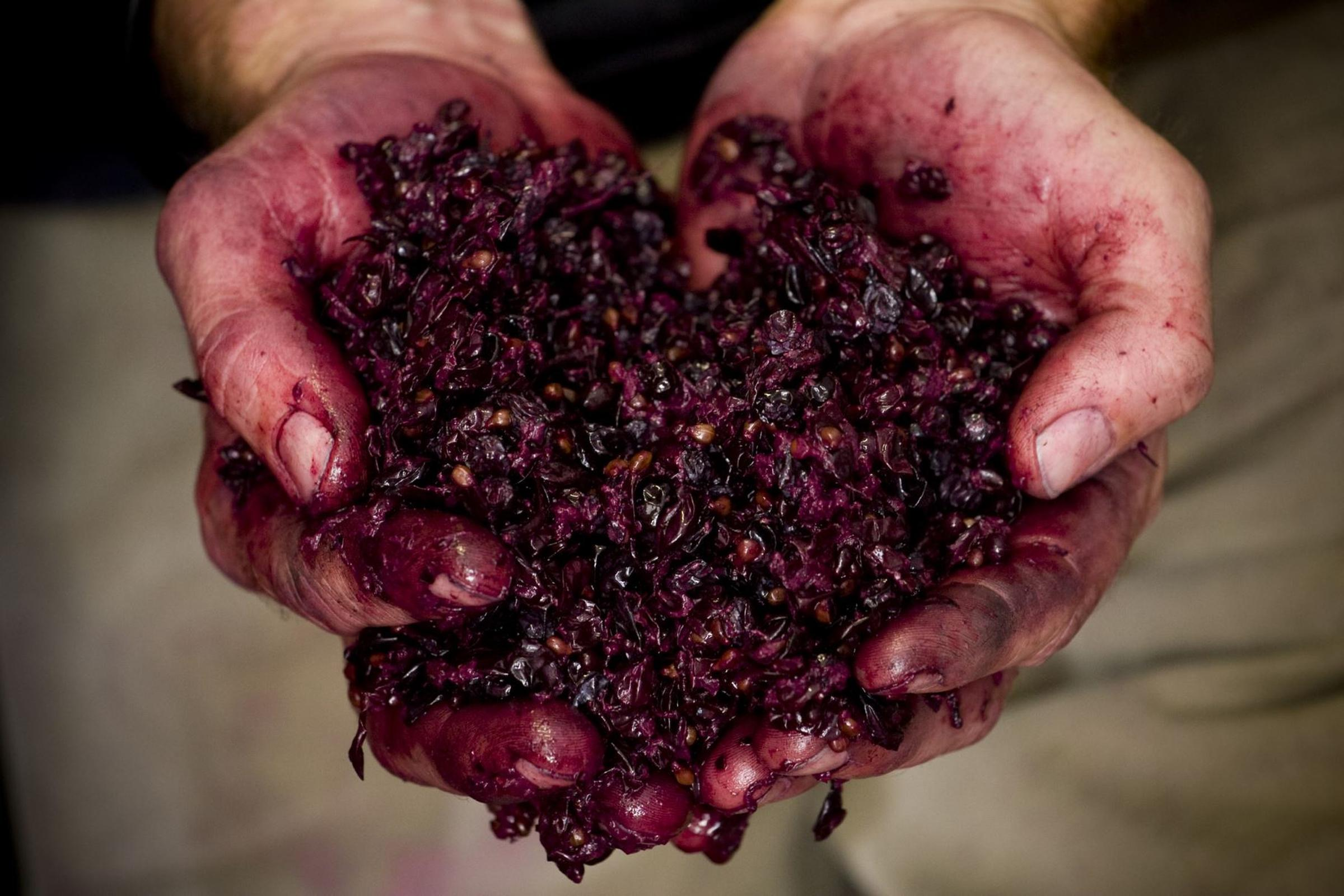 https://a.storyblok.com/f/105614/1818x1212/8782585e6a/gemtree-mikes-hands-with-grapes.jpeg