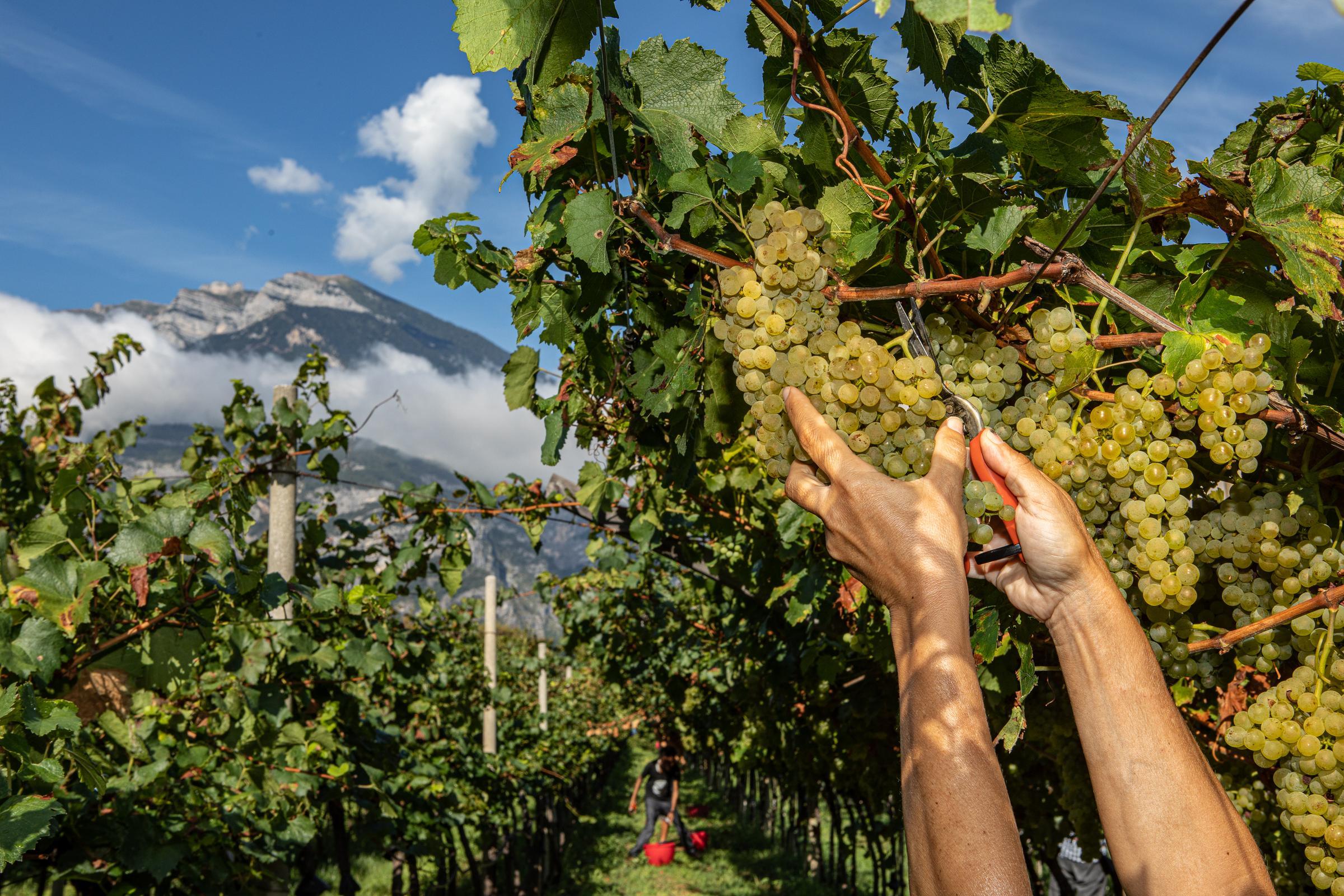 https://a.storyblok.com/f/105614/3543x2362/5904bdb1ad/ferrari-vinyard.jpg