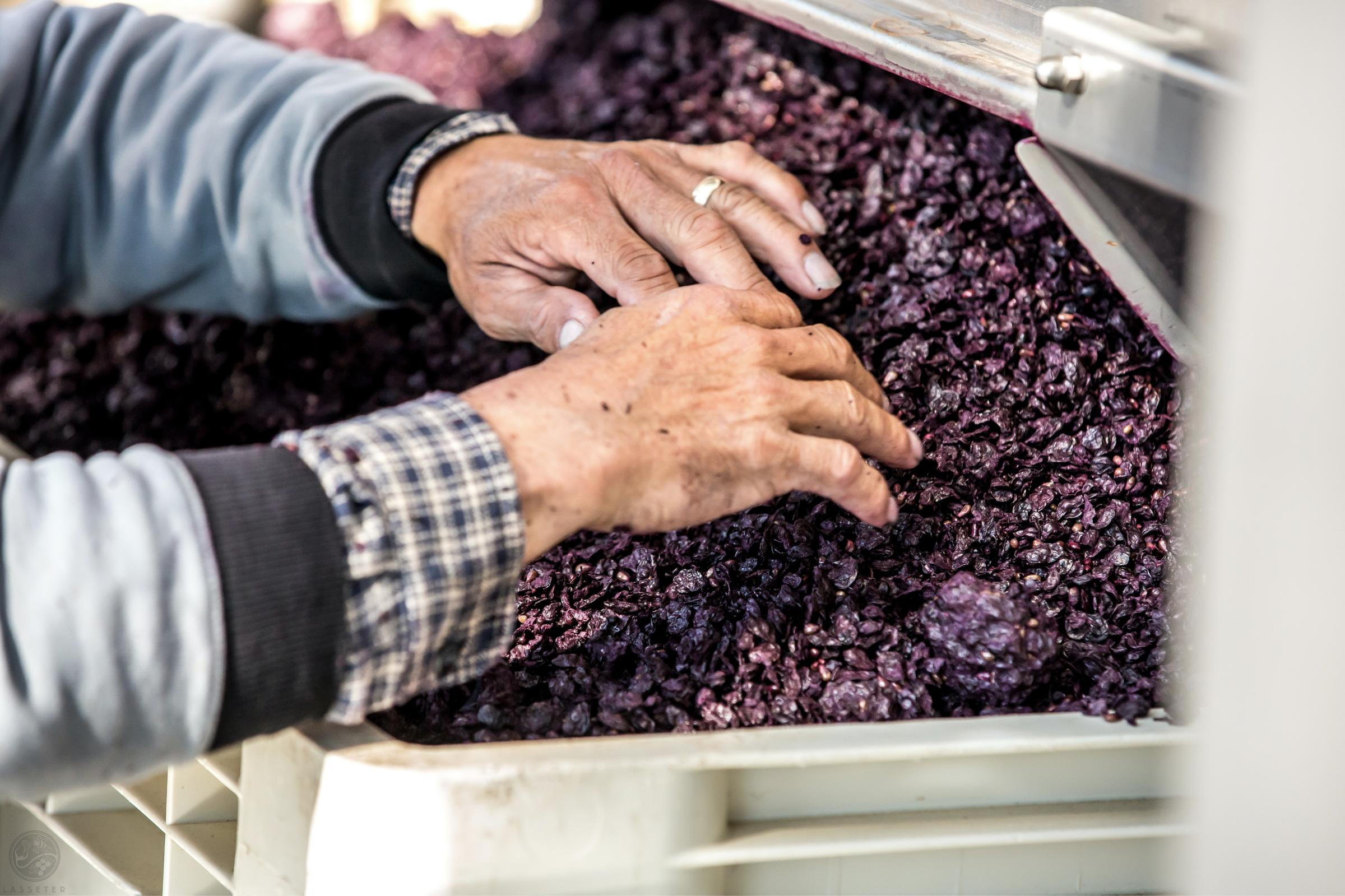 https://a.storyblok.com/f/105614/4082x2720/3c65b895c8/ward-wines_07.jpg