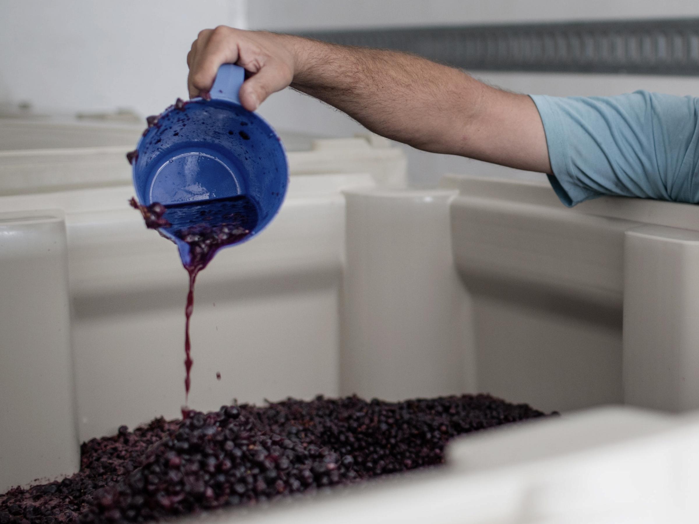 https://a.storyblok.com/f/105614/4478x3358/469fd63667/ward-wines_011.jpg