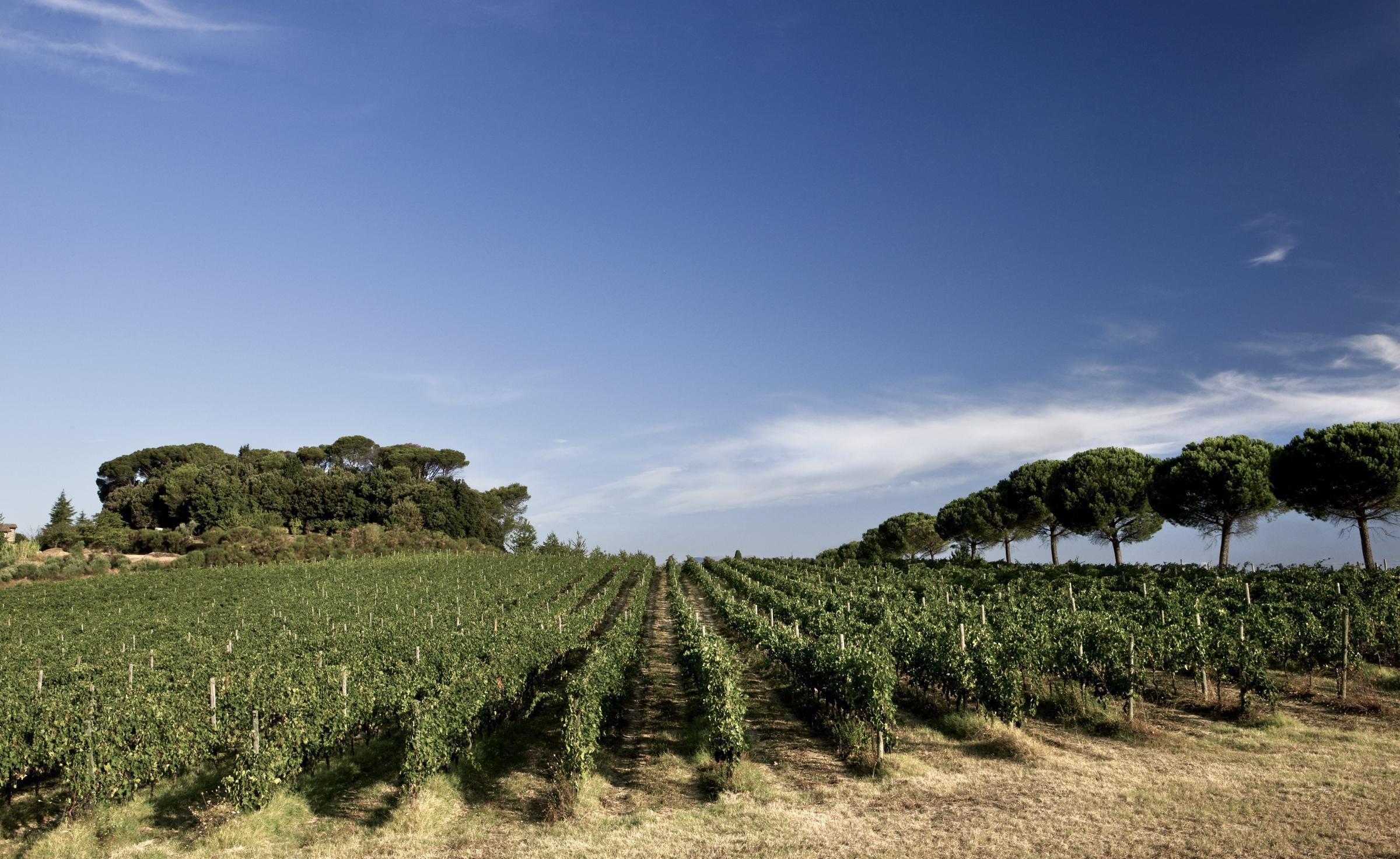 Din leverantör av viner med *kvalitet, ursprung & personlighet*