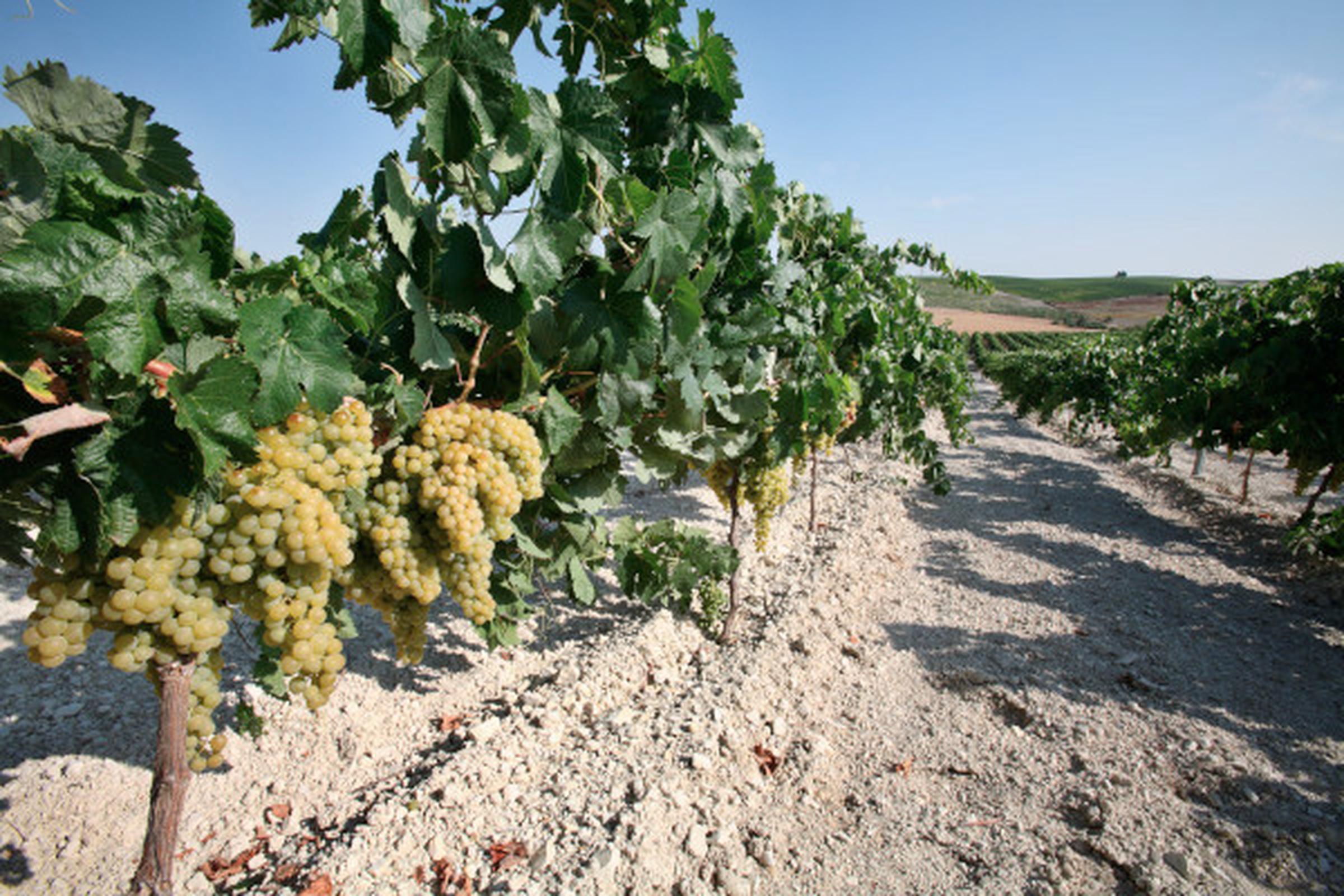 https://a.storyblok.com/f/105614/600x400/6c9507c255/jerez-wines.jpeg