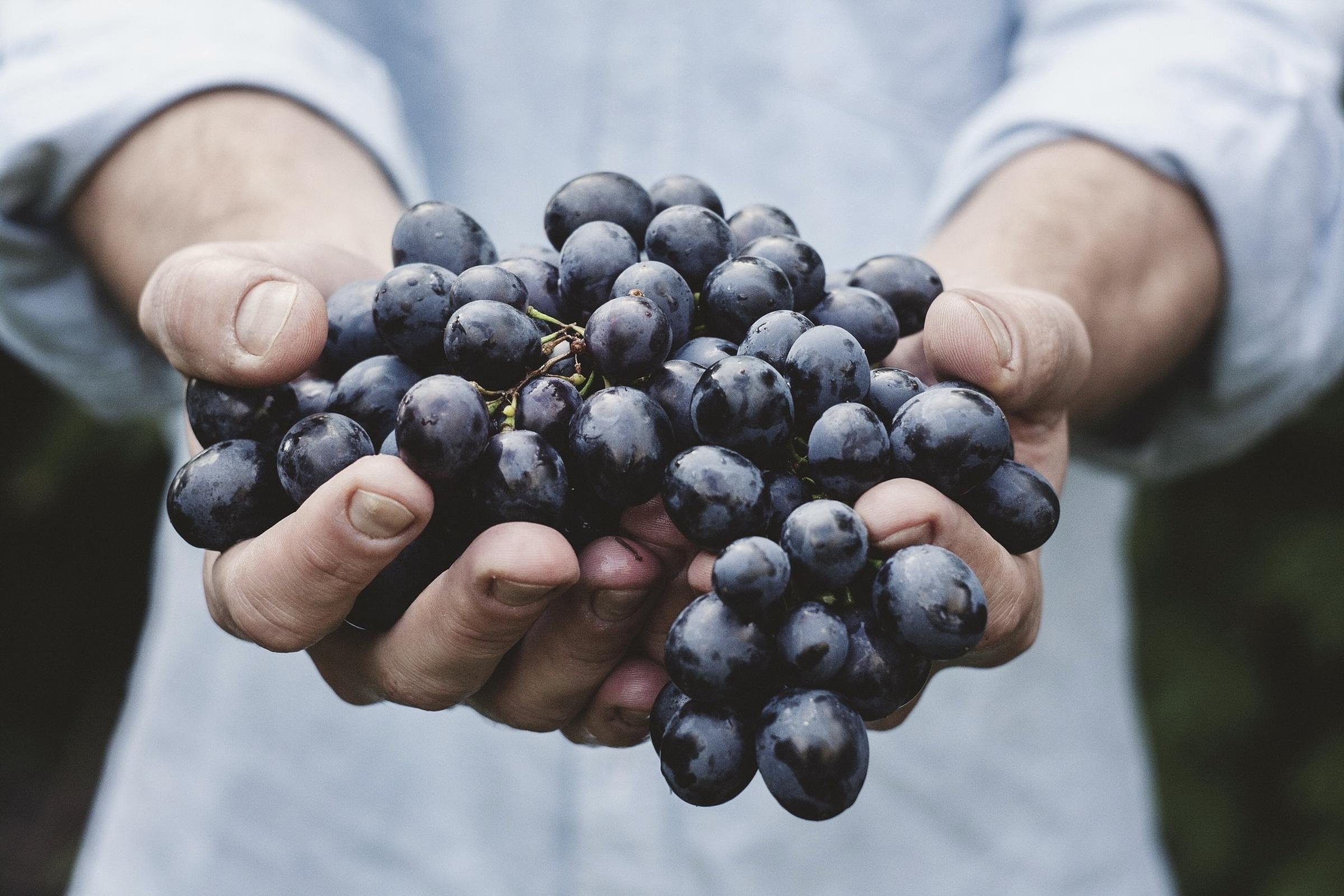 https://a.storyblok.com/f/105614/7680x5120/36a30cdbb0/ward-wines_043.jpg