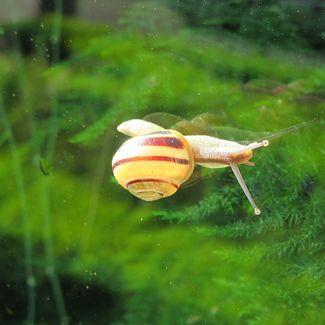 snail on window