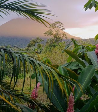 palm trees and flowers with view of arenal volcano covered in clouds