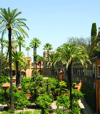 lush green palm trees in seville gardens in spain