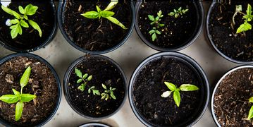 Some seedlings as seen from above