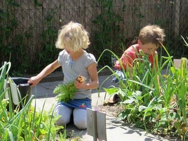 Ideeën voor de schooltuin voor kleuters week 12, kleuteridee.nl ,oogstweek, wortels oogsten