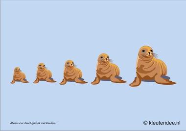 Zeehonden meten met kleuters hoek voor poolonderzoekers, kleuteridee.nl , thema Noordpool & Zuidpool, free printable.