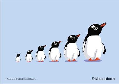 Pinguïns meten met kleuters hoek voor poolonderzoekers, kleuteridee.nl , thema Noordpool & Zuidpool, free printable.