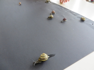 Slakkenrace met kleuters 3, thema tuincentrum, kleuteridee.