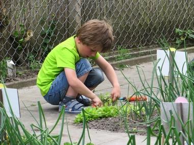 Ideeën voor de schooltuin voor kleuters week 8, kleuteridee , snijsla oogsten