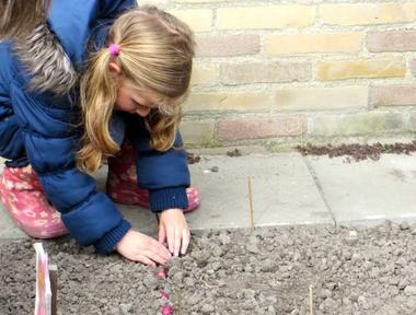 Ideeën voor de schooltuin voor kleuters week 1a, kleuteridee.nl , plantuitjes poten .