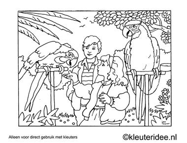 Kleurplaat papegaai voeren, kleuteridee , Preschool coloring, parrot conducting.