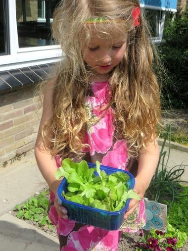 Ideeën voor de schooltuin voor kleuters week 8, kleuteridee , oogsten