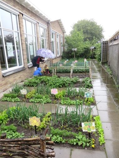 Ideeën voor de schooltuin voor kleuters week 9, kleuteridee , tomaten planten