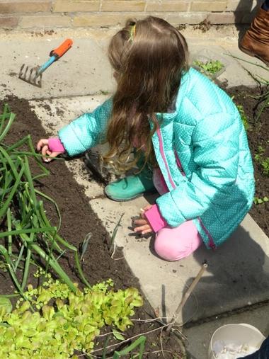 Ideeën voor de schooltuin voor kleuters week 7, kleuteridee , bonen planten en zaaien