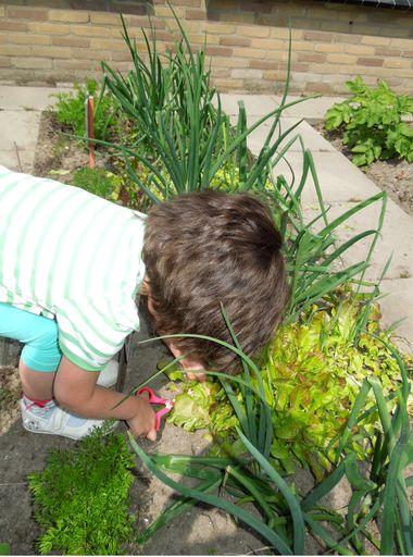 Ideeën voor de schooltuin voor kleuters week 10, kleuteridee , plusla oogsten