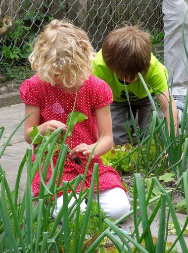 Ideeën voor de schooltuin voor kleuters week 10, kleuteridee , radijs oogsten
