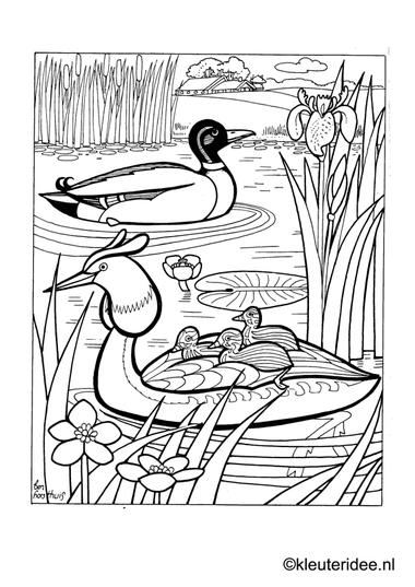 Kleurplaat eend met kuikentjes 2, kleuteridee.nl , duck and ducklings preschool coloring.