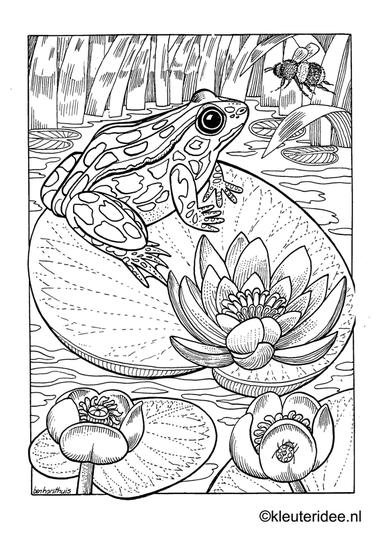Kleurplaat kikker, kleuteridee.nl , frog preschool coloring .