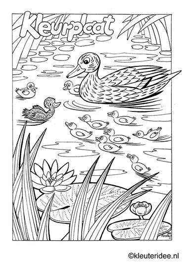 Kleurplaat eend met kuikentjes, kleuteridee.nl , duck and ducklings preschool coloring.