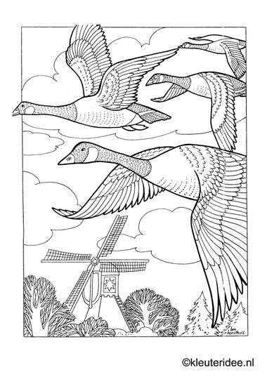 Kleurplaat ganzen in de polder, kleuteridee.nl , geese preschool coloring.