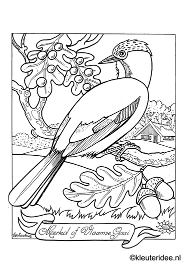 Kleurplaat vlaamse gaai, kleuteridee.nl , jay preschool coloring.