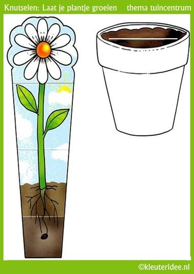Groeiend plantje knutselen met kleuters , thema tuincentrum, kleuteridee, free pintable.
