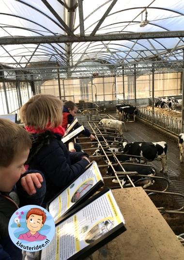 Excursie naar de boerderij, thema de koe, kleuteridee 6.