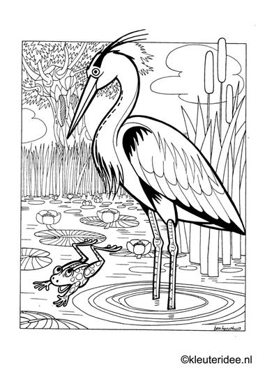 Kleurplaat reiger en kikker, thema de sloot, kleuteridee.nl , heron and frog, pond theme preschool coloring.