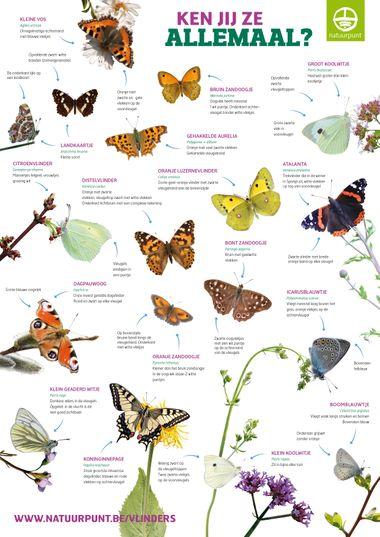 Vlinders herkennen, kleuteridee