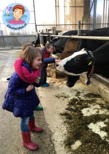 Excursie naar de boerderij, thema de koe, kleuteridee.