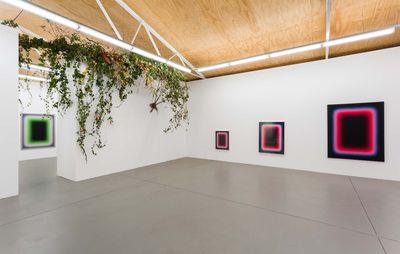 installation view of three paintings of varying sizes but similar patterns in a white room with plants hanging from the ceiling