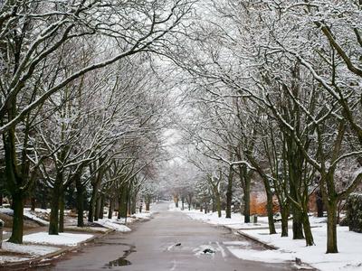 Snowy view of Toronto Park