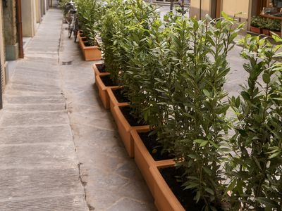 Pot plants lining the road in Florence