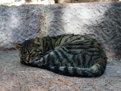 A happy cat sleeping in the ruins