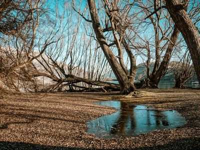 Frozen puddles and bare trees near Lake Hayes