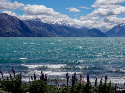 Early lupins on the shores of Lake Ohau