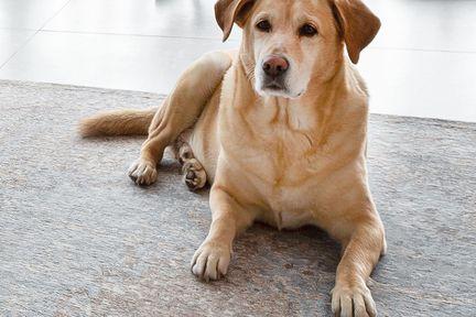 Hund Charly in P.MAX Wohnzimmer.