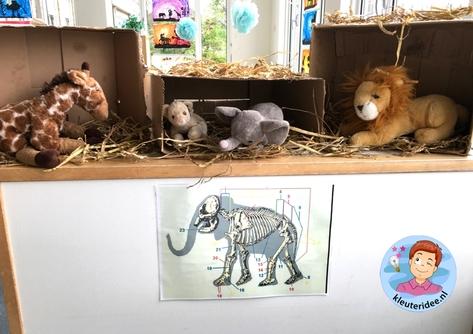 Safari dierenpost kleuters, thema Afrika,kleuteridee, Kindergarten roleplay African animal clinic, Africa theme 3.