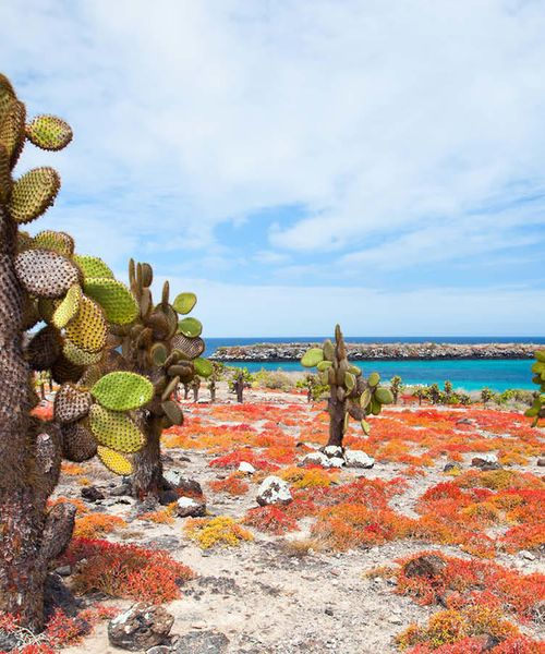 green and brown cactus on a beach with red shrubs on santa cruz island