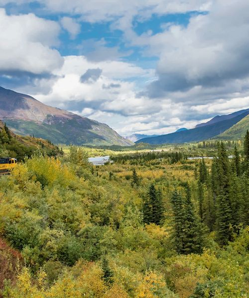 navy and yellow train riding through denali national park and preserve in alaska